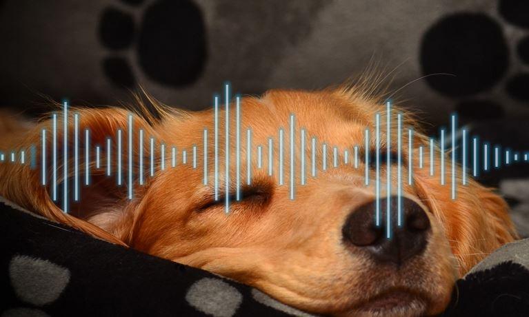 Sleeping Dog with sound bars